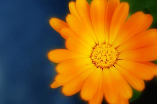 Flower -Ness
